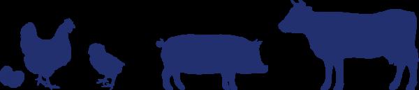 vacas_pollos_y_cerdos